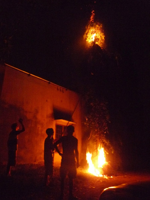 Tổ ong vò vẽ từng tấn công khiến 1 người chết, 6 người bị thương tại ấp Kỉnh Nhượng, xã Vĩnh Hòa, huyện Phú Giáo, tỉnh Bình Dương bị người dân dùng lửa xua đuổi.