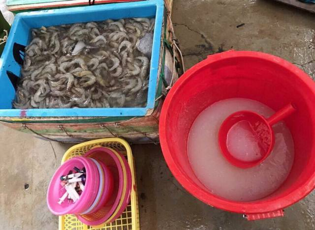 Bắt tôm tạp chất trong tháng 6/2017 tại tỉnh Bạc Liêu. (Ảnh: CTV)