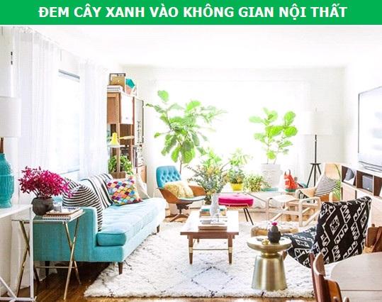Mang cây xanh vào không gian nội thất đang là xu hướng trang trí nhà ở hàng đầu hiện nay. Bạn có thể bố trí cây riêng lẻ ở các góc phòng, hay đặt nó thành cụm trong một tiểu cảnh hoặc trên kệ trang trí.