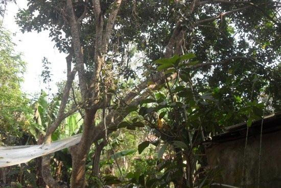 Khu vực nơi phát hiện anh H. treo cổ trên cây (ảnh VKSND Đắk Lắk)