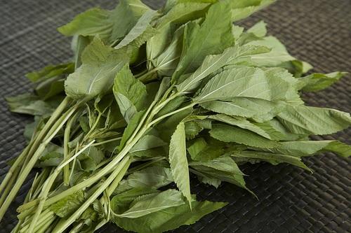 Rau sạch vườn nhà: Bí quyết trồng các loại rau nấu canh - 3