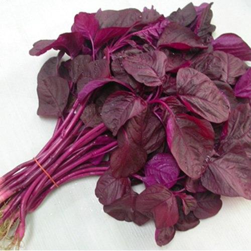 Rau sạch vườn nhà: Bí quyết trồng các loại rau nấu canh - 4