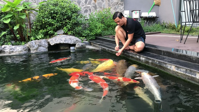 Đàn cá Koi bạc tỷ quy tụ những Koi đẳng cấp, có kích thước khủng của đại gia Sài Gòn. Ảnh: Ngô Thắng