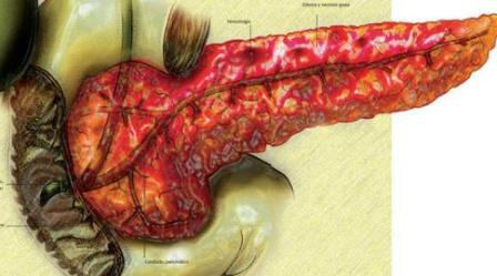 Tụy là bộ phận rất quan trọng của hệ tiêu hóa, nếu bị viêm sẽ dẫn tới suy đa cơ quan (ảnh minh họa)