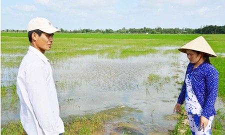 Sóc Trăng: Người chặn đứng dòng nước tưới lúa của nông dân thua kiện! - 2