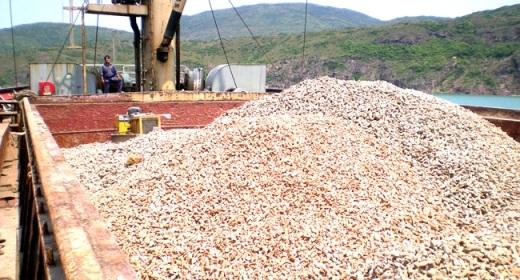 Kim ngạch xuất khẩu sắn và các sản phẩm từ sắn của Việt Nam hiện đứng thứ 2, sau Thái Lan.