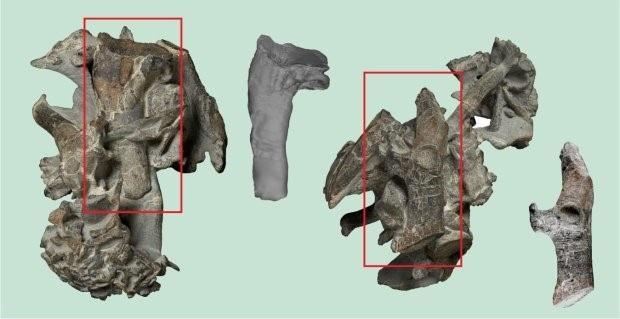 Xương đùi, xương cánh và một số xương khác được tìm thấy.