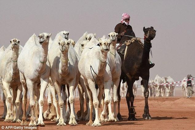 Lễ hội diễn ra trong 28 ngày ở ngoại ô thủ đô Riyadh của Ả Rập Saudi, tổng số tiền thưởng lên tới 57 triệu USD (tương đương gần 1.300 tỷ đồng).