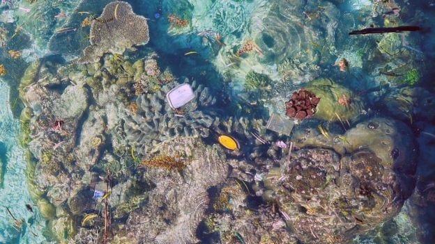 Nhựa nổi trên các rạn san hô - Ảnh của Kathryn Berry.