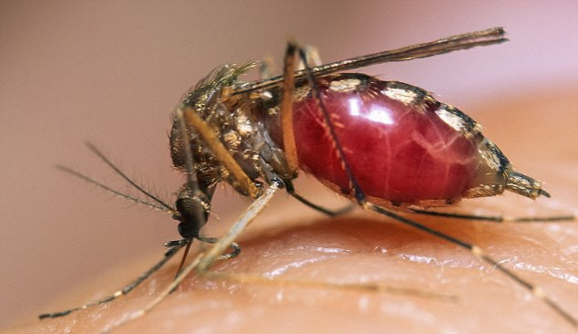 Cận cảnh quá trình hút máu của muỗi trên cơ thể người - 4