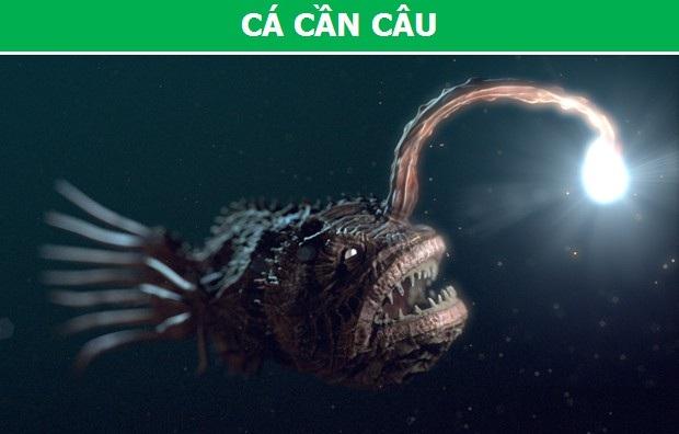 Cận cảnh những loài động vật có khả năng phát sáng đặc biệt nhất trên trái đất - 3