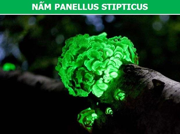 Cận cảnh những loài động vật có khả năng phát sáng đặc biệt nhất trên trái đất - 5