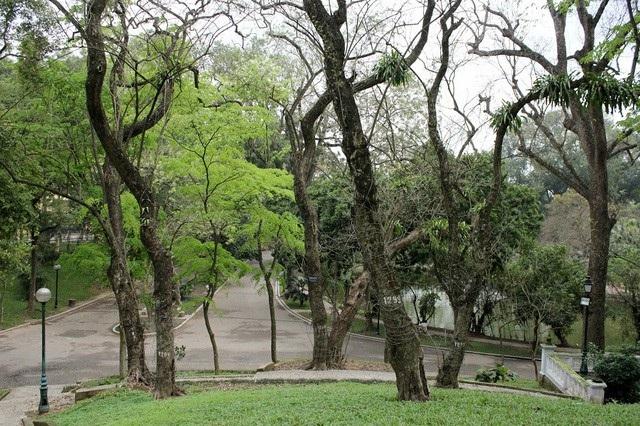 Vườn sưa đỏ trong công viên Bách Thảo