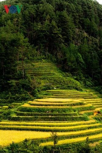 Ngắm đồi mâm xôi đẹp nổi tiếng trong mùa vàng Mù Cang Chải - 6