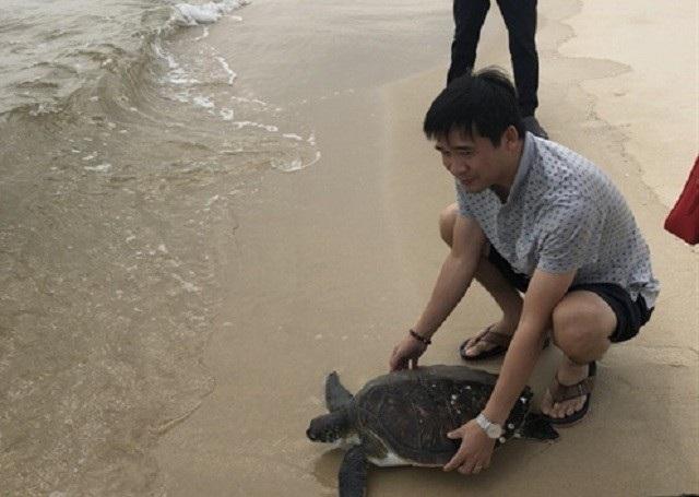 Cá thể rùa quý hiểm được thả về biển.