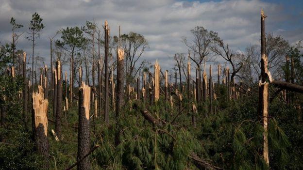 Rừng cây ở Marianna bị quật gãy do siêu bão. (Ảnh: Getty)