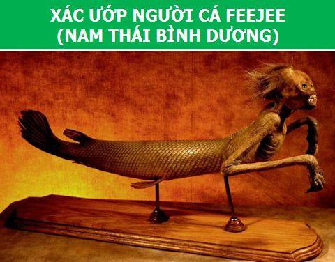 """Có hay không sự tồn tại của """"Người Cá""""? - 1"""