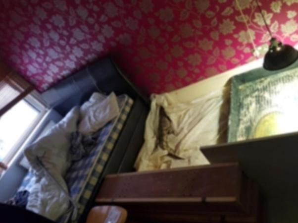 Phòng ngủ chật hẹp của Thompson nuôi tới 70 loài bò sát