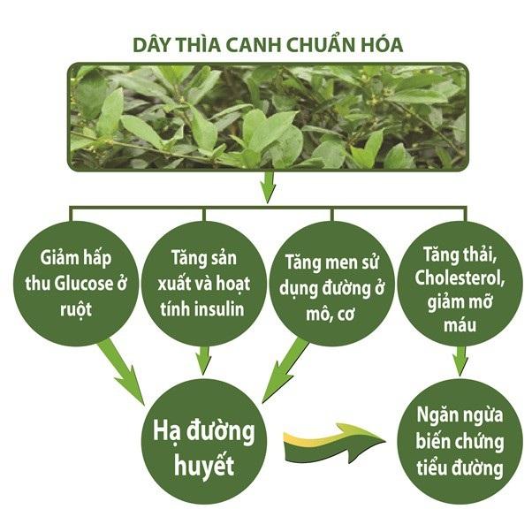 Dây thìa canh giúp hạ đường huyết mới được ghi vào dược điển Việt Nam - 4