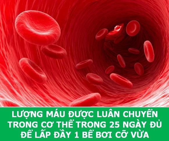 Những sự thật sẽ về máu người sẽ khiến bạn phải ngỡ ngàng! - 2