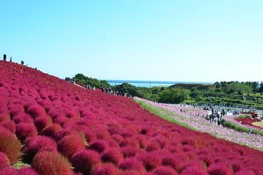 Đến Nhật nhớ khám phá ngọn đồi đẹp như cổ tích này - 1
