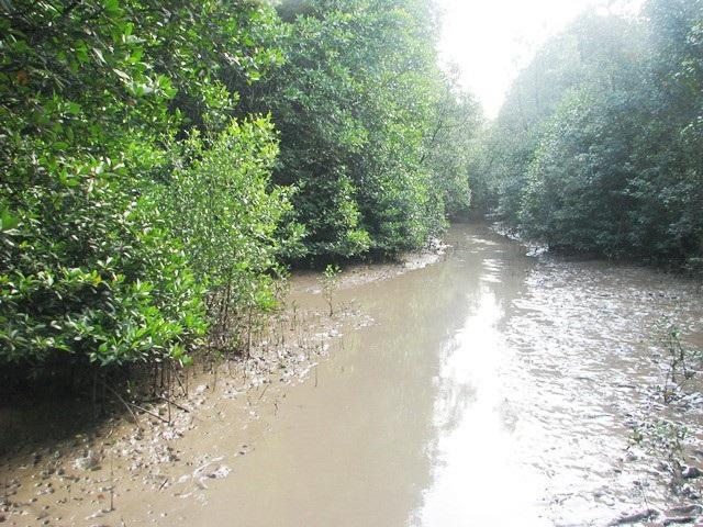Khu vực rừng ở Mũi Cà Mau.