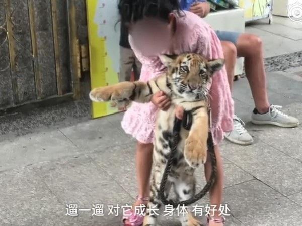 Hình ảnh cô bé thường xuyên đi dạo và chơi đùa cùng chú hổ con khiến nhiều người xôn xao