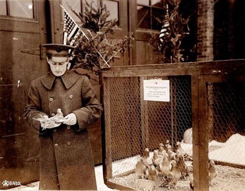 Chim bồ câu phục vụ hồi Thế chiến thứ nhất của quân đội Mỹ. Ảnh: DEPARTMENT OF DEFENSE