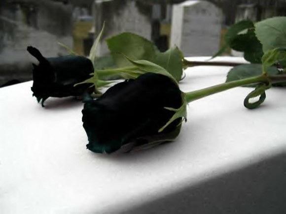 Hoa hồng đen nửa triệu đồng/bông vẫn hút khách dịp 20/10 - 5