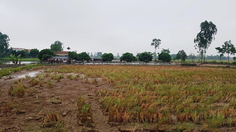 Dự án nuôi trồng thủy sản gần 12 tỷ đồng bỏ hoang: Sở Nông nghiệp lên tiếng - Ảnh 3.