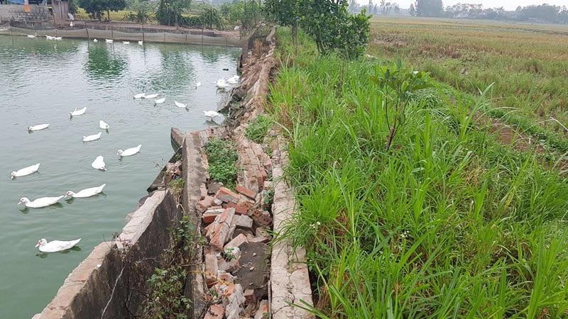 Dự án nuôi trồng thủy sản gần 12 tỷ đồng bỏ hoang: Sở Nông nghiệp lên tiếng - Ảnh 2.