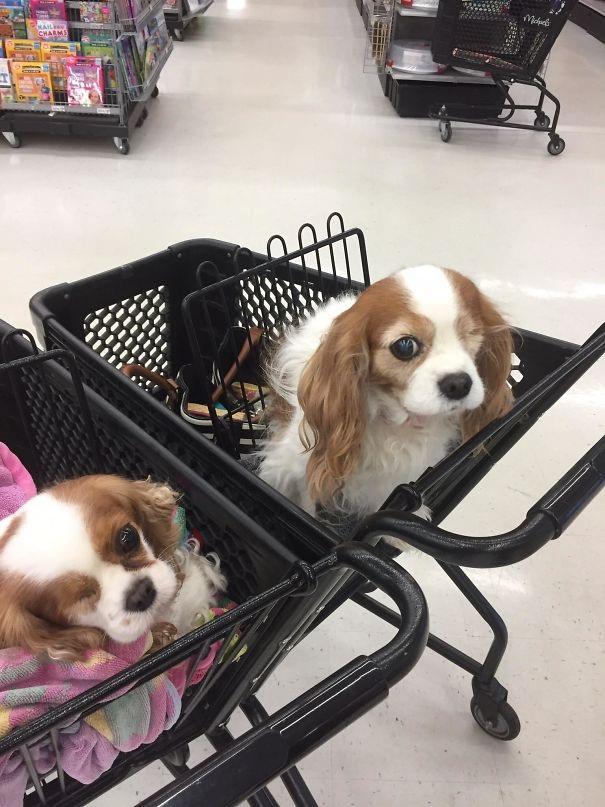 Em cún xinh đẹp có con mắt đặc biệt của tôi đã gặp ngay người chị em song sinh của nó tại một siêu thị nọ.