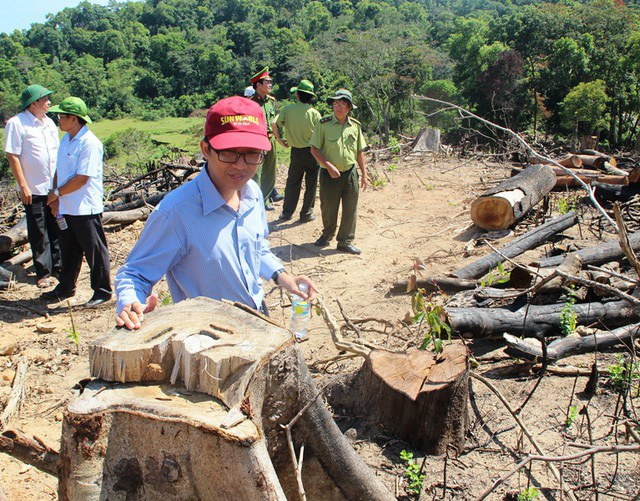 Vụ phá hơn 64 ha rừng ở xã An Hưng (huyện An Lão) là vụ phá rừng lớn nhất tỉnh Bình Định từ trước đến này.
