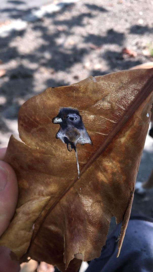 Sản phẩm đi bậy của một chú chim lên chiếc lá, có hình giống y như bức chụp chính chú chim ấy vậy.