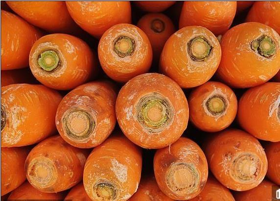 Tác dụng của cà rốt làm tăng tính kết dính của xi măng - 1