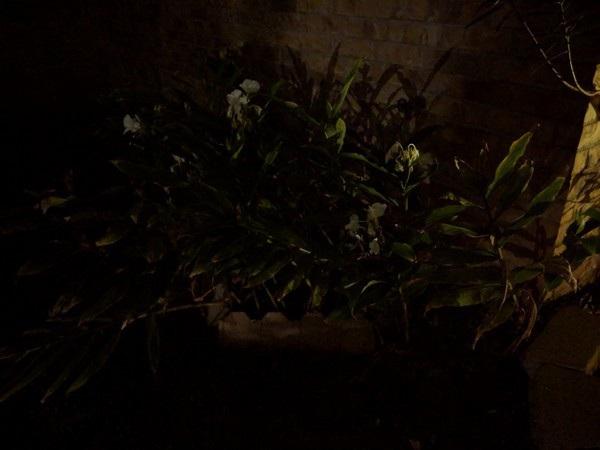 Ấn tượng với những bức ảnh chụp bằng chế độ ban đêm của Pixel 3 và 3 XL - 18