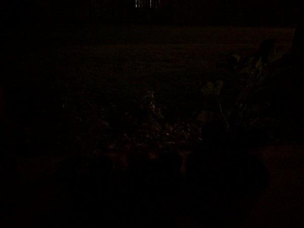 Ấn tượng với những bức ảnh chụp bằng chế độ ban đêm của Pixel 3 và 3 XL - 8