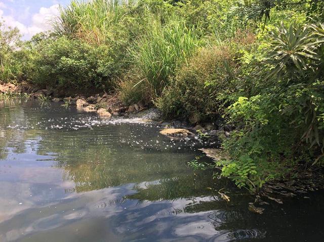 Nước thải từ nhà máy xả thẳng ra sông Dinh, gây ô nhiễm môi trường.
