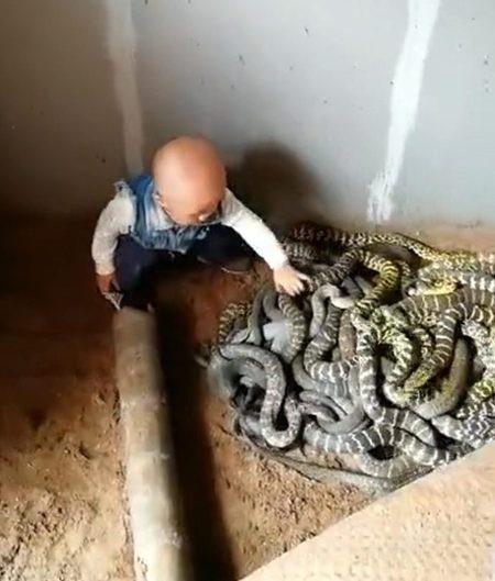 Đứa trẻ đùa nghịch với bầy rắn trong khi được cha mẹ cho phép