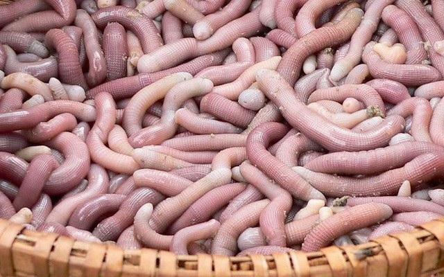 Đây được xem là món ăn đặc sản có giá đắt đỏ như vàng khi 1kg sá sùng có giá vào khoảng 4 triệu đồng/kg.