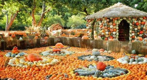 Lễ hội ma quỷ, đến thăm ngôi làng làm từ gần 100.000 quả bí ngô ở Mỹ - 3