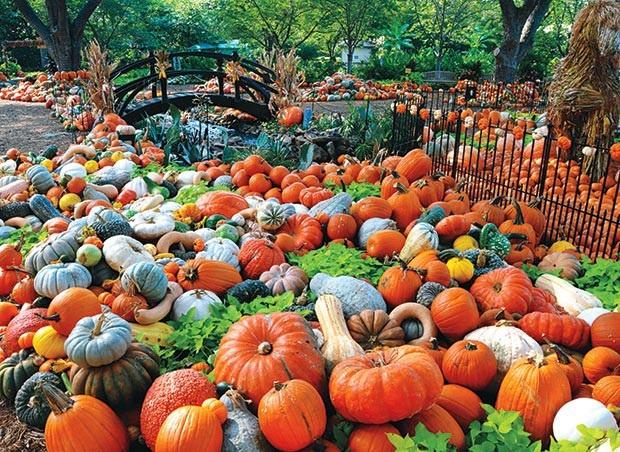 Lễ hội ma quỷ, đến thăm ngôi làng làm từ gần 100.000 quả bí ngô ở Mỹ - 2