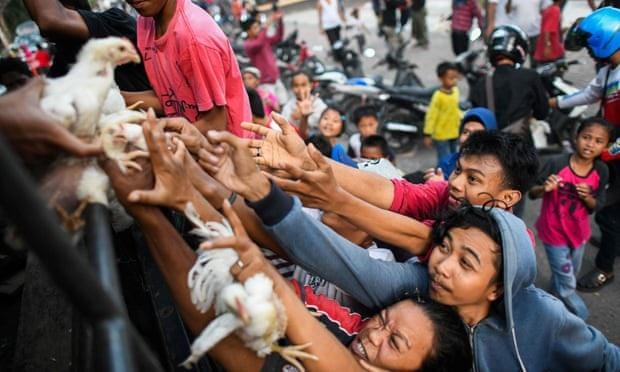 Người dân tranh nhau nhận gia cầm sống được phân phát từ xe cảnh sát ở bên ngoài trại sơ tán tại Palu. (Ảnh: AFP)