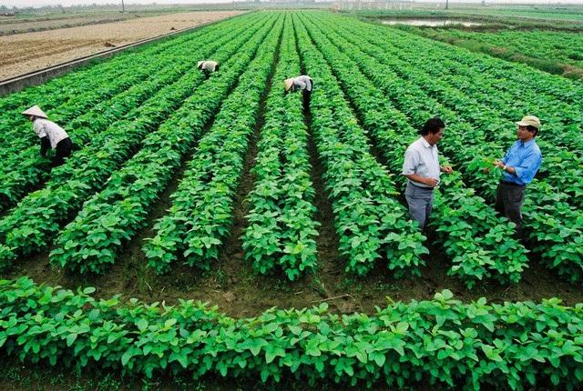 Tích tụ tập trung đất đai để phát triển nông nghiệp
