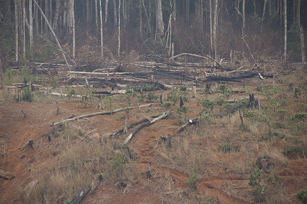 Hiện trường rừng bị phá tại lâm phần của công ty Đắk N'Tao