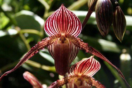 Chiêm ngưỡng loài hoa lan 136 triệu đồng/cây - 1