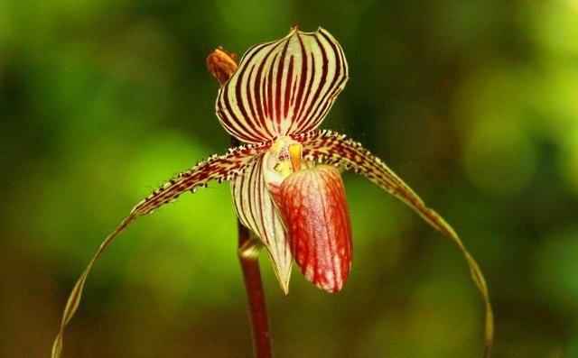 Chiêm ngưỡng loài hoa lan 136 triệu đồng/cây - 6