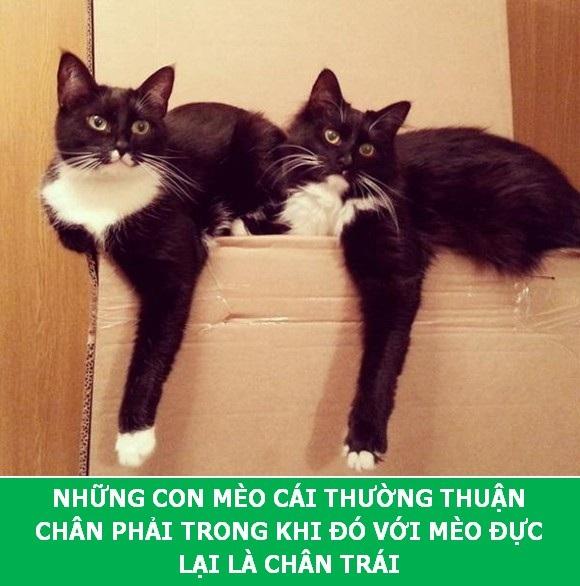 Những sự thật khoa học thú vị về loài mèo sẽ khiến bạn phải bất ngờ - Ảnh 2.
