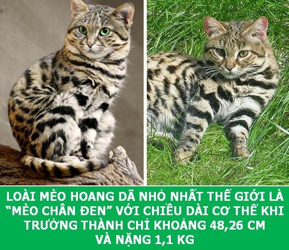 Những sự thật khoa học thú vị về loài mèo sẽ khiến bạn phải bất ngờ - Ảnh 3.