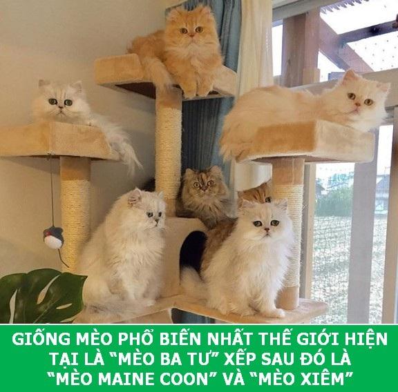 Những sự thật khoa học thú vị về loài mèo sẽ khiến bạn phải bất ngờ - Ảnh 4.